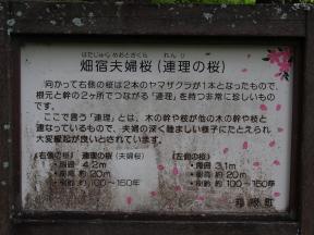 2015P6072047.jpg