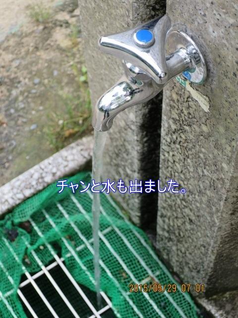 IMG_4395.jpg