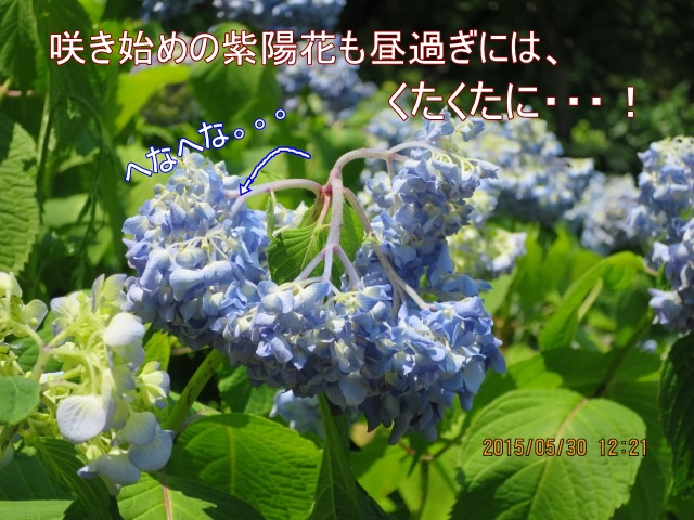 yama03300.jpg