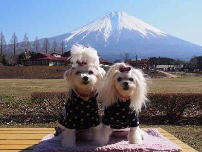 富士山33