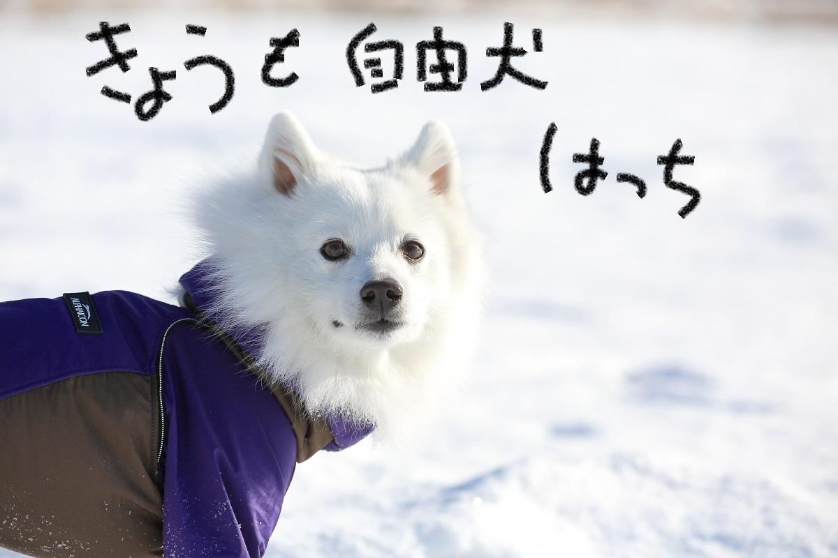 1_20150109215728e55.jpg