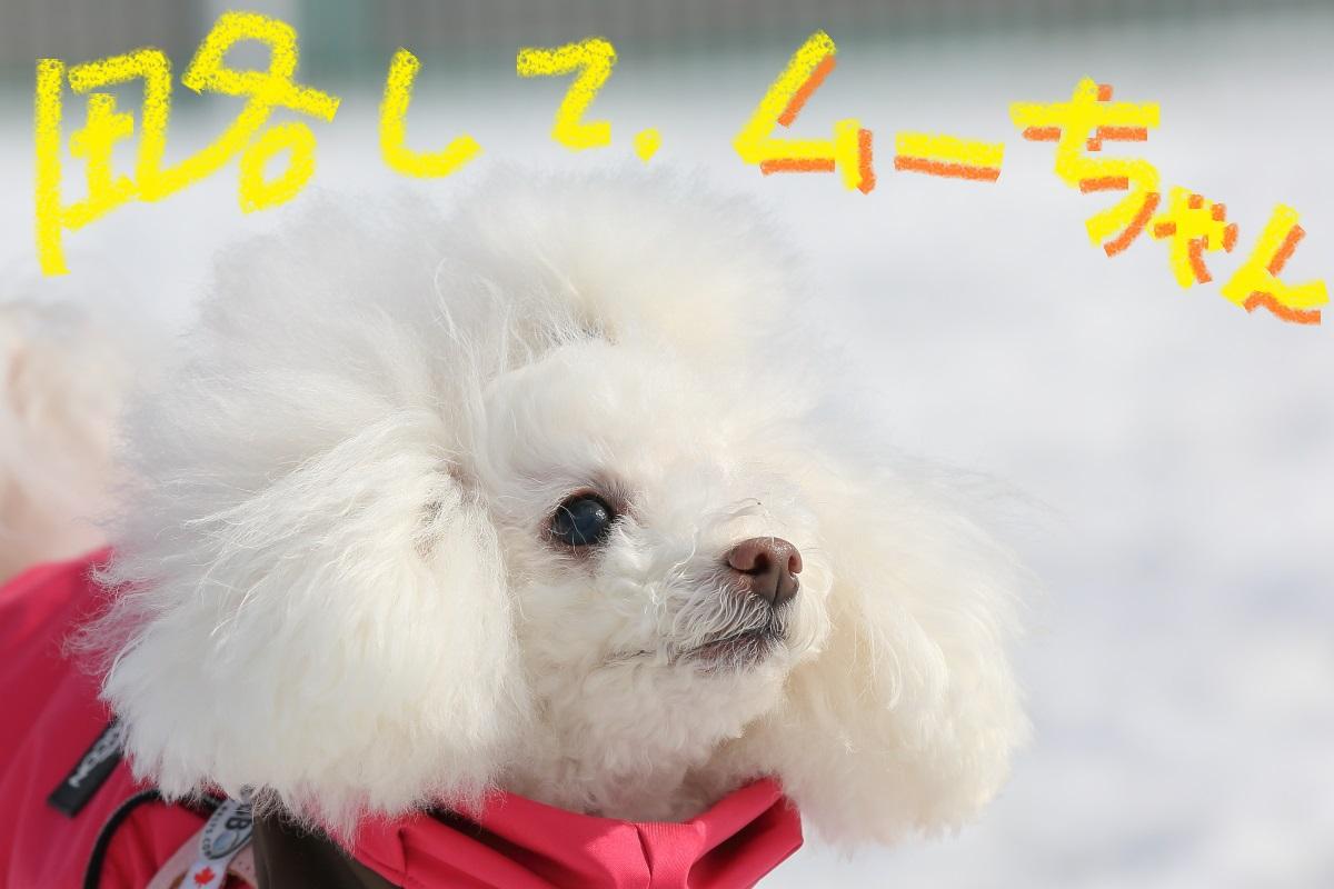 3_20150219193222fa1.jpg