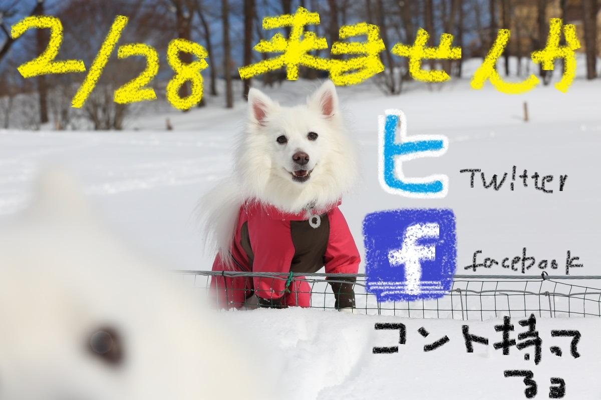 5_20150222185048b8f.jpg