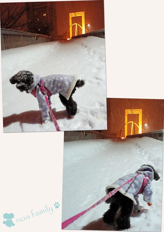 20150109-01雪散歩