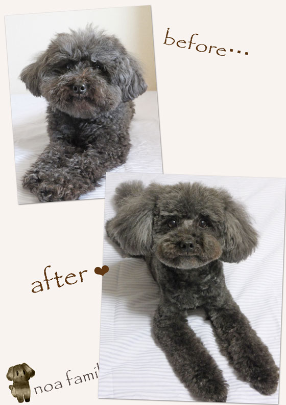 20150523before-after.jpg