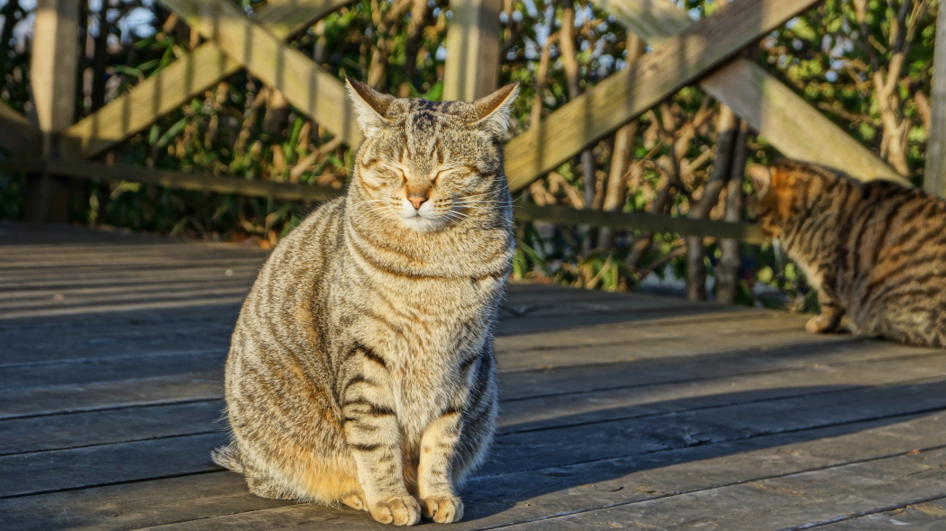 植物園の猫AAAー1-20150221