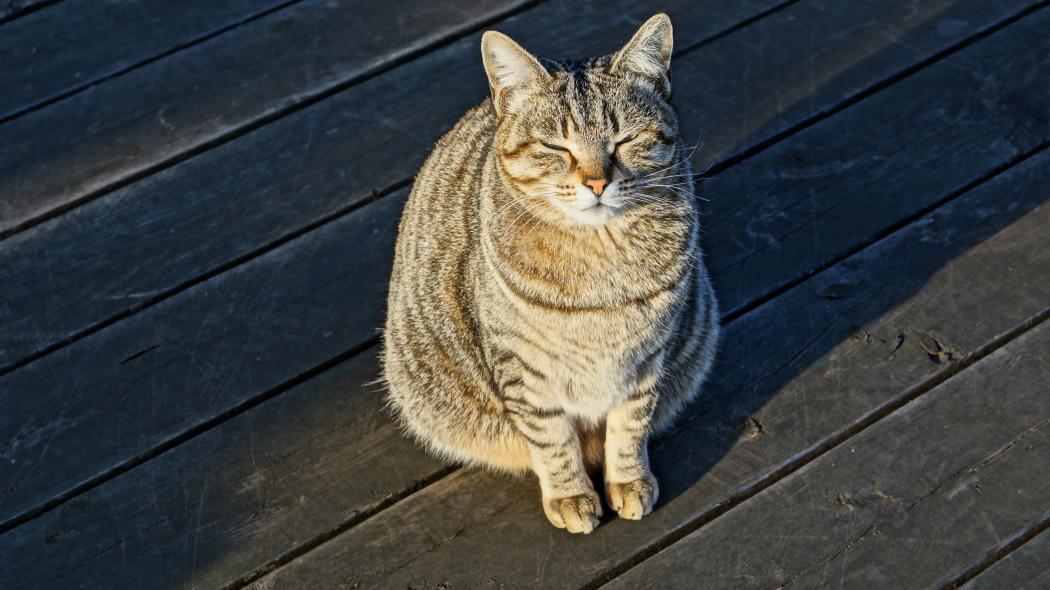 植物園の猫AAAー3-20150221
