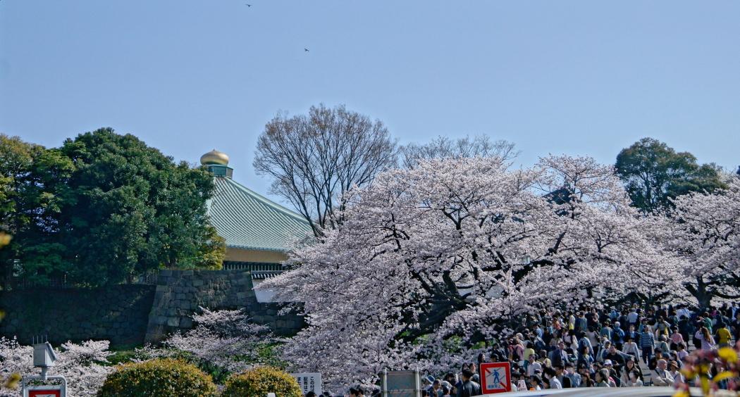 北の丸公園桜2AAA015-75-