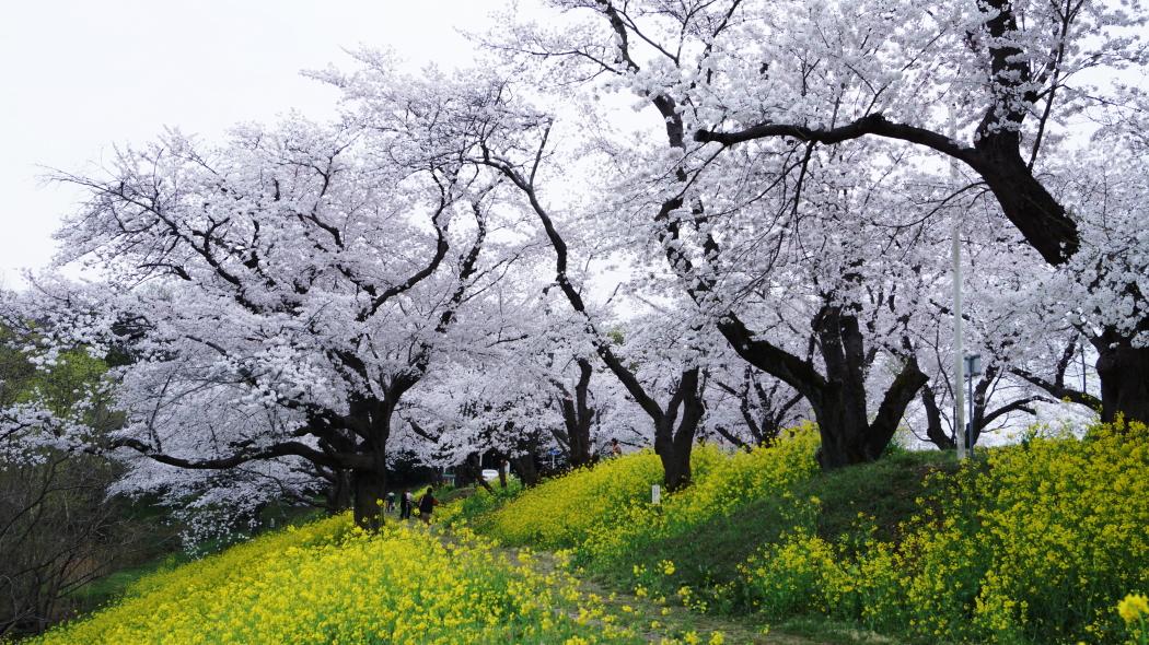 AAAー6-清雲寺20150406.