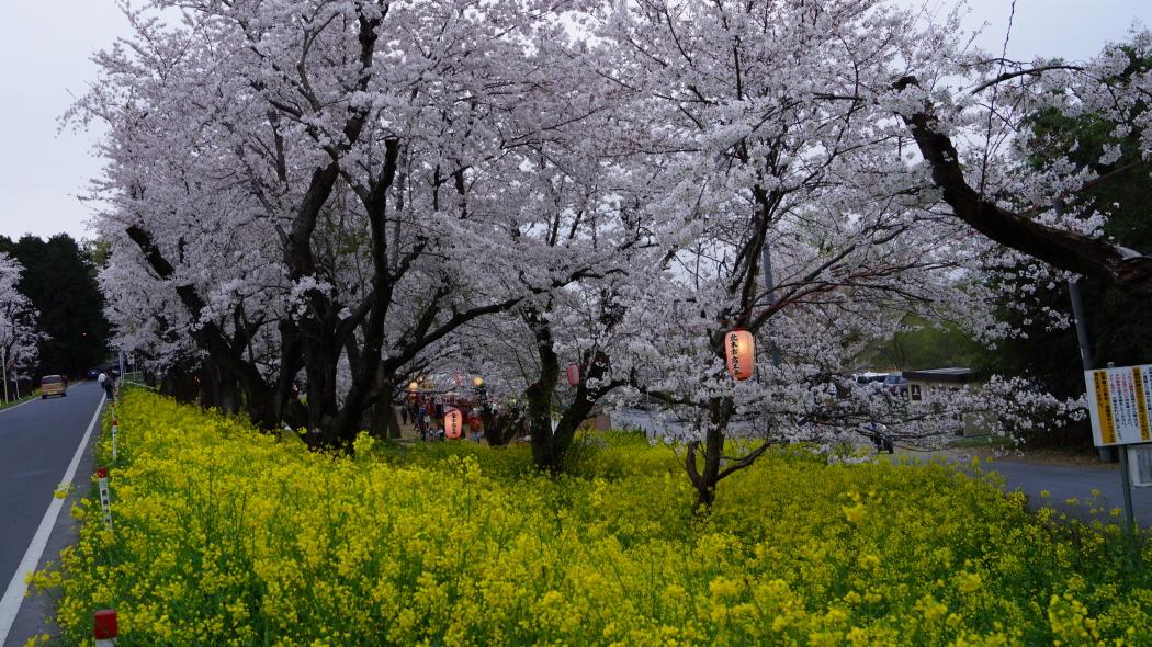 AAA北本・天神公園ー2-2015.