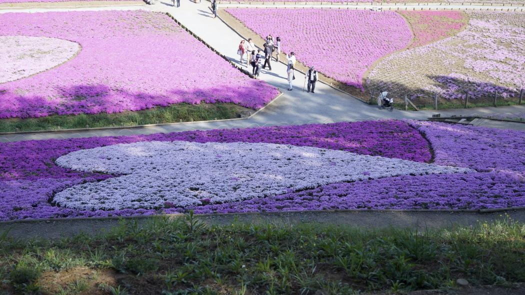 AAA芝桜-13-羊山公園20150501738