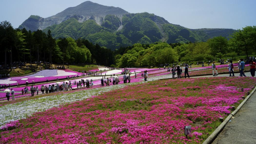 AAA武甲山&芝桜-26-羊山公園20150501144.