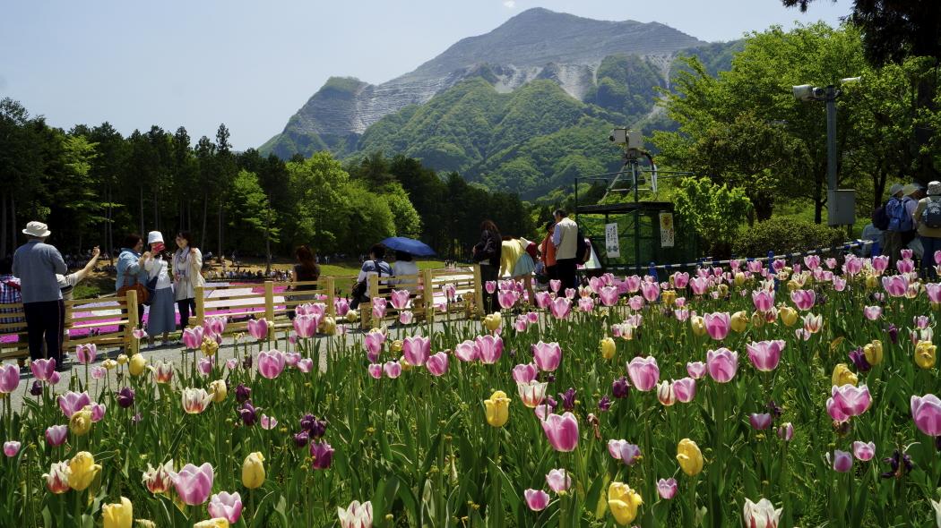 AAA武甲山&チュリップ-27-羊山公園20150501144