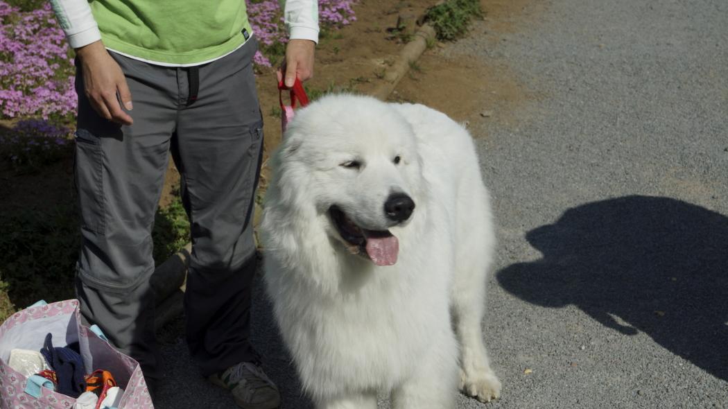 AAA犬-2-羊山公園20150501144.