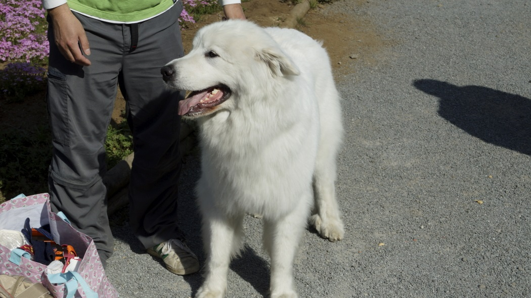 AAA犬-1-羊山公園20150501144.