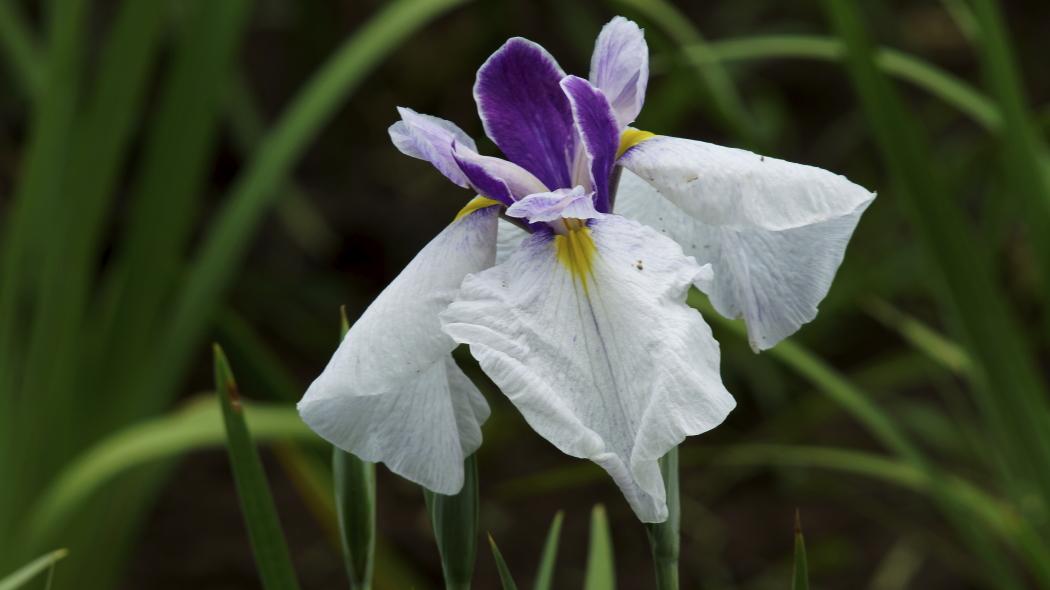 AAA紫Wー8ー智光山公園
