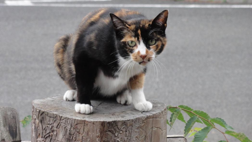 AAA猫-2-20150612