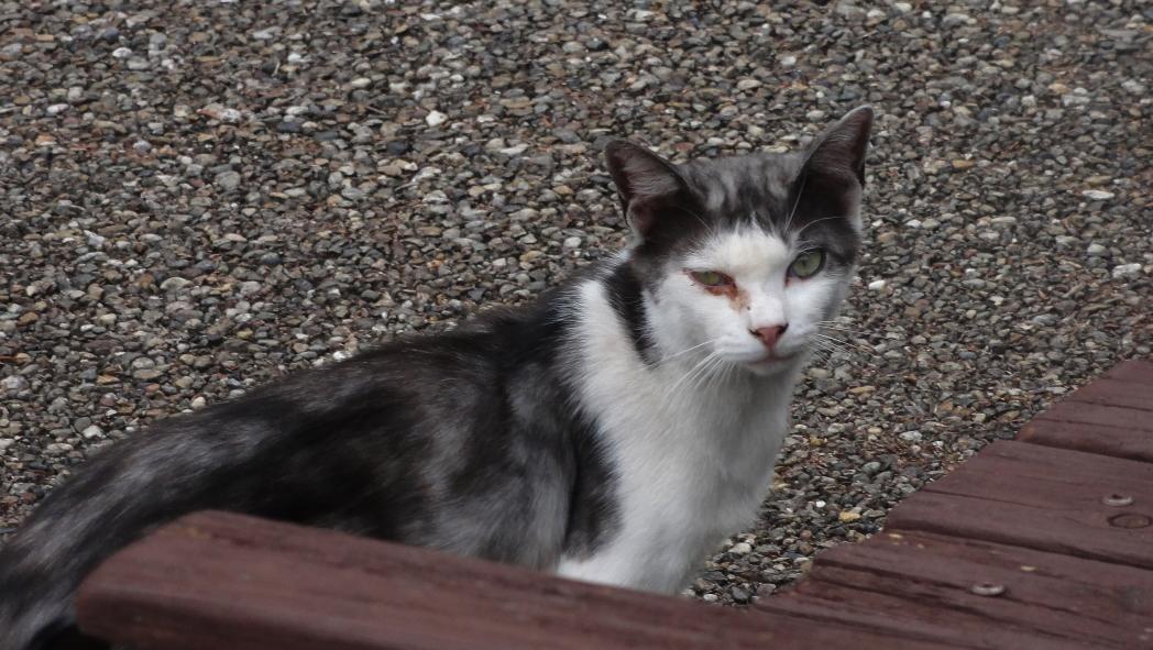 AAA猫-1-20150612