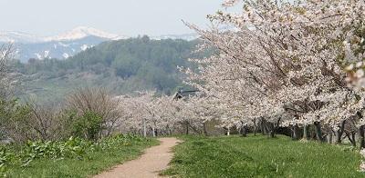 桜並木 2015-05-02051