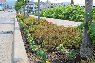 リタロード植栽2015-05-24 027