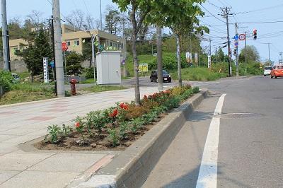 リタロード植栽2015-05-24 031