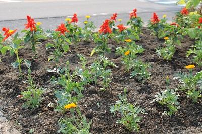 リタロード植栽2015-05-24 038