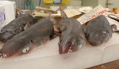 柿崎商店 魚 2015-06-06045