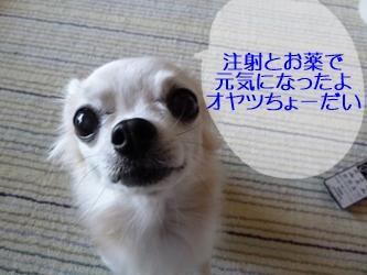 ブログ用20141024-134058