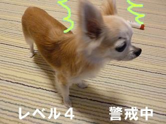 ブログ用20141024-181529