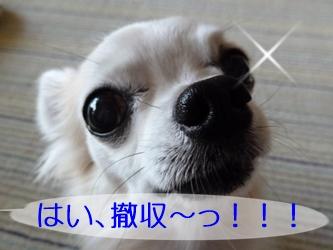 ブログ用20141024-134106