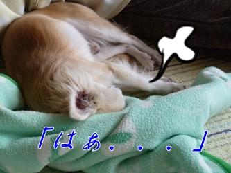 ブログ用P1040599-20141219-154410