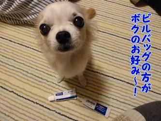 ブログ用P1040592-20141209-191137