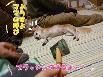 ブログ用20141213-201326