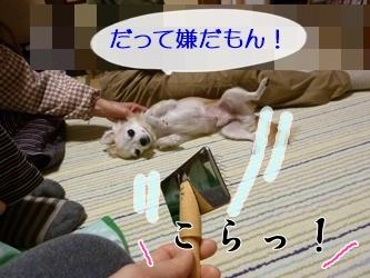 ブログ用P1040598-20141213-201338