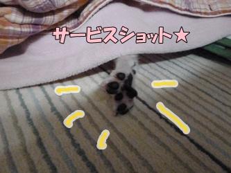 ブログ用P1040610-20141221-153315