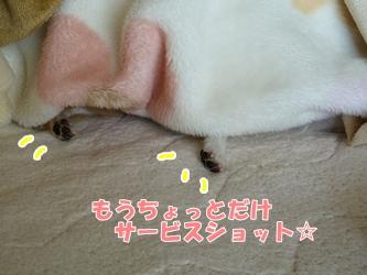 ブログ用20150112-132026