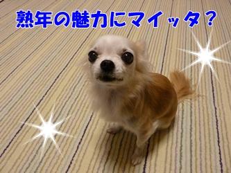 ブログ用P1040646-20141226-165654
