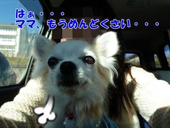 ブログ用20150107-150356