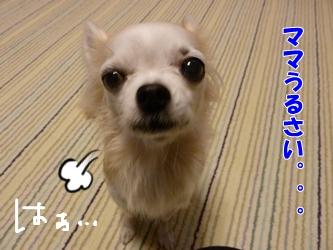 ブログ用P1040648-20141226-165829