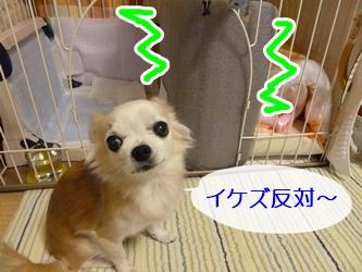 ブログ用P1040593-20141210-173807