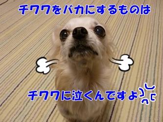 ブログ用P1040650-20141226-165838