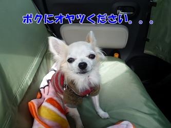 ブログ用038-20150124-124453