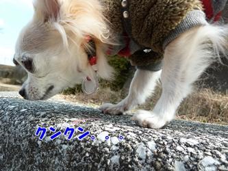 ブログ用045-20150124-140246