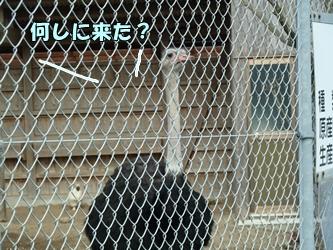 ブログ用047-20150124-143857