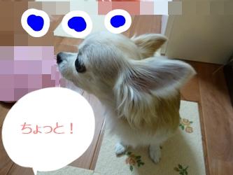 ブログ用077-20150130-205144 (12)