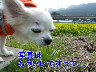 ブログ用006-2015 02 24-112849