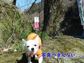 ブログ用002-2015 02 20-114948