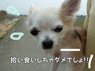 ブログ用011-2015 03 22-125020