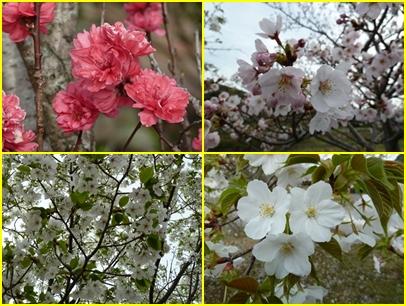 ブログ用008-2015 03 30-164433-tile