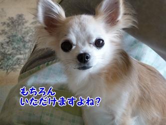 ブログ用002-2015 03 27-124518